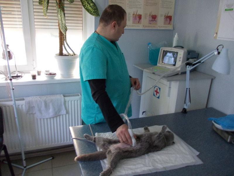 Где находятся ветеринарные клиники в Киеве?