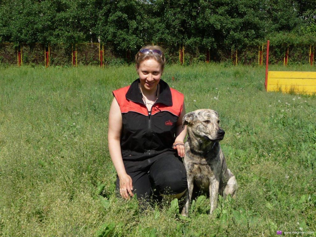 Где осуществляют дрессировку собак в Киеве?