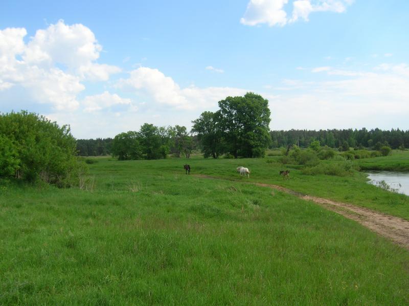 Как приватизировать земельный участок в Киеве?
