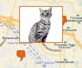 Где купить котенка в Киеве?
